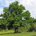 Wunschbaum - ein Projekt im AWO Haus am Mühlenteich
