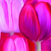 93_Red_Tulips