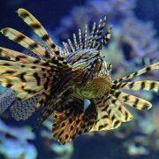 Fisch Tropenaquarium Norderstedt
